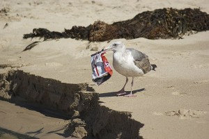 Plastic-Pollution-Seabirds