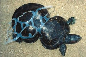 turtle-caught-in-plastic-ring